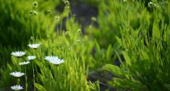 春天滋补养生汤-为一整年的健康打下基础