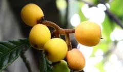 春天吃什么水果好-六大健康过别错过