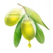 橄榄油营养价值与作用