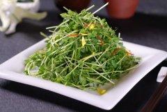 """春季养生食谱推荐 营养又美味的八款""""芽"""""""
