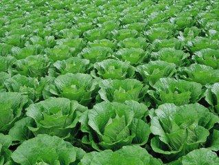 大雪节气养生必吃9种蔬菜