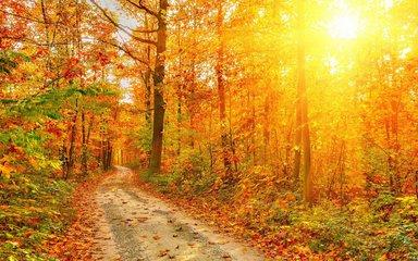 秋季进补要适度