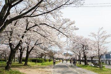 春暖花开时 谨防五官病