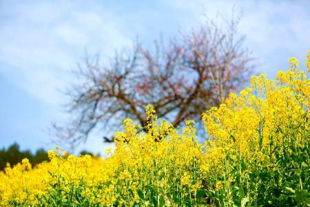 《黄帝内经》中春季养生论